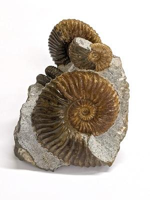 紀伊國屋書店:化石鉱物展 同時開催、自由研究&課題図書フェア
