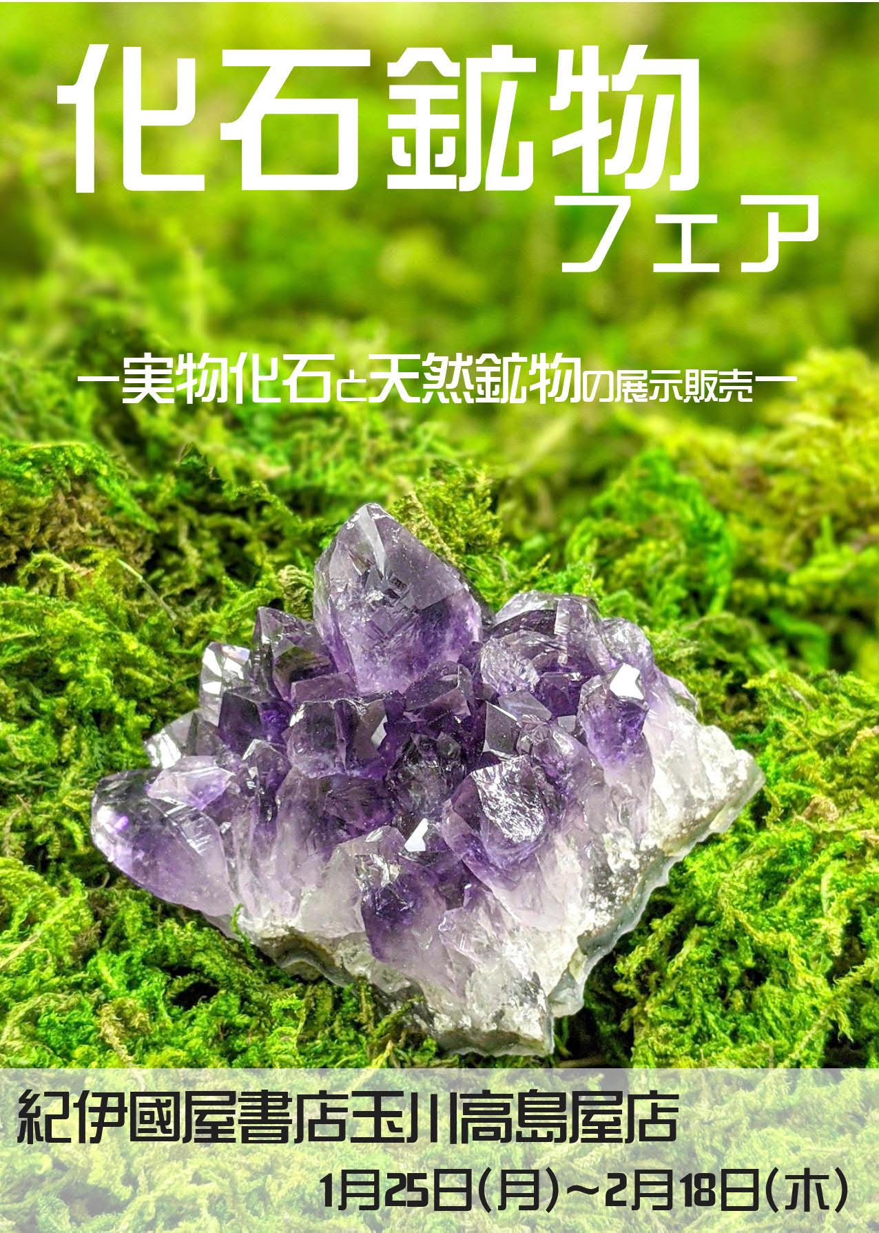 紀伊國屋書店:世界の化石・鉱物フェア  2021年1月25日(月)~2月18日(木)