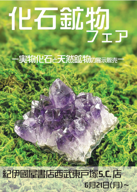 紀伊國屋書店:化石鉱物フェア ー実物化石と天然鉱物の展示販売ー