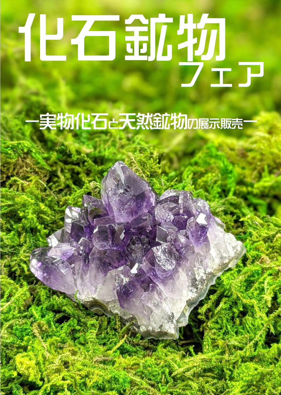 紀伊國屋書店:化石鉱物展