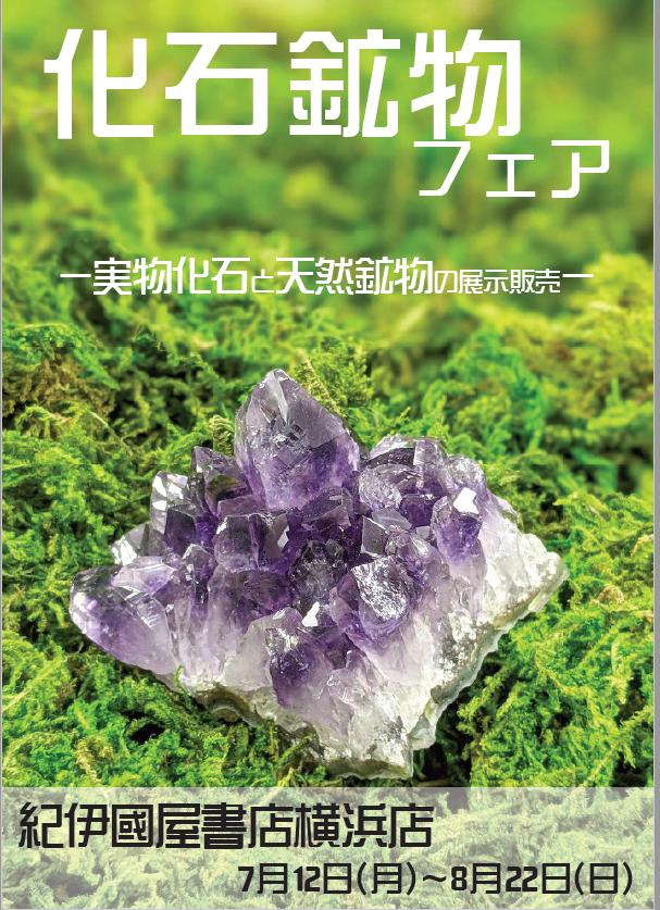 紀伊國屋書店:化石鉱物フェア